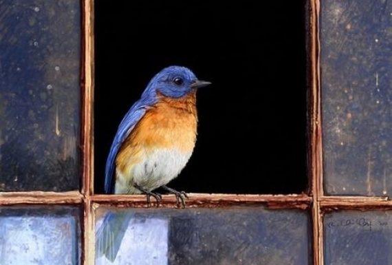 Um passarinho